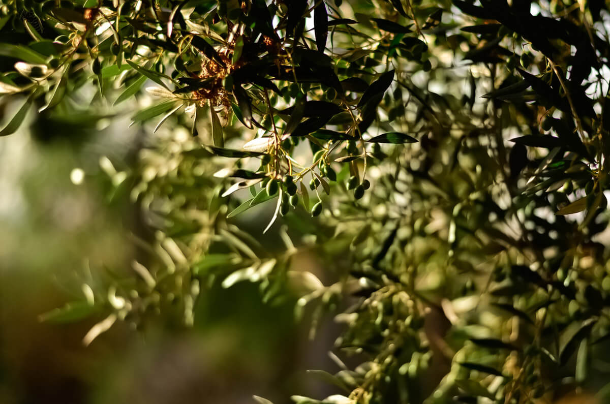 blur-branches-close-up-3